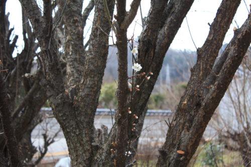 福島県福島市 花見山公園の情報 2020年2月5日 IMG_6843