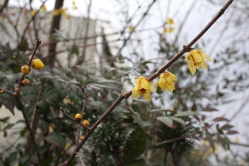 福島県福島市 花見山公園の情報 2020年2月5日 IMG_6845