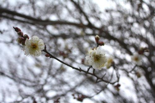 福島県福島市 花見山公園の情報 2020年2月5日 IMG_6847