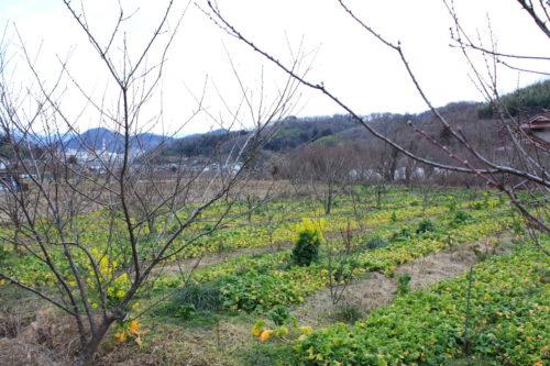 福島県福島市 花見山公園の情報 2020年2月5日 IMG_6852