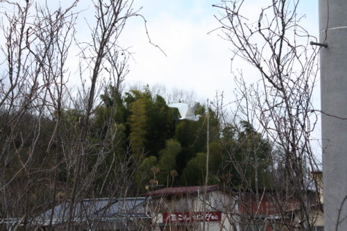 福島県福島市 花見山公園の情報 2020年2月19日 IMG_6853