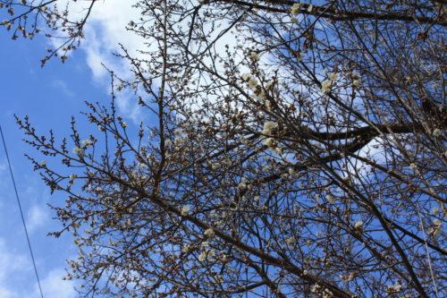 福島県福島市 花見山公園の情報 2020年2月19日 IMG_6855
