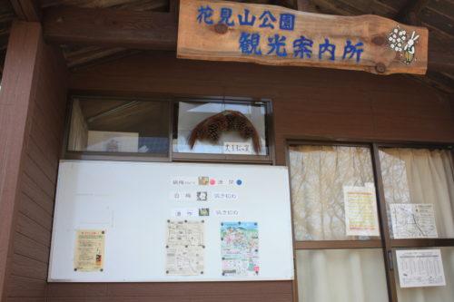 福島県福島市 花見山公園の情報 2020年2月19日 IMG_6856