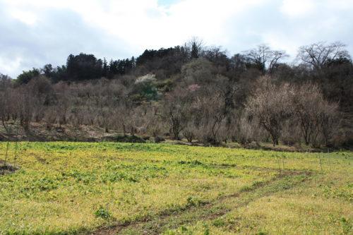 福島県福島市 花見山公園の情報 2020年2月19日 IMG_6857