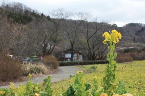 福島県福島市 花見山公園の情報 2020年2月19日 IMG_6858