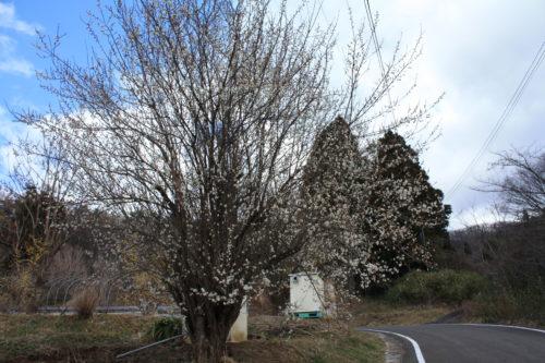福島県福島市 花見山公園の情報 2020年2月19日 IMG_6863