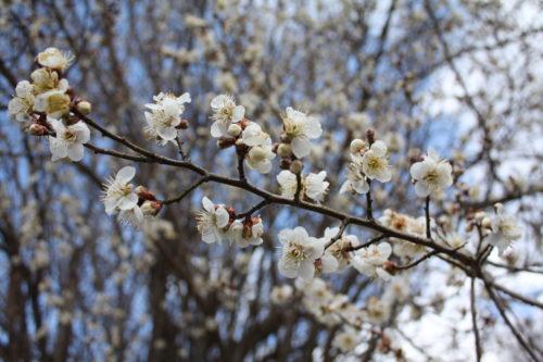福島県福島市 花見山公園の情報 2020年2月19日 IMG_6864