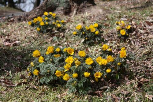 福島県福島市 花見山公園の情報 2020年2月19日 IMG_6868