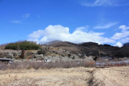 福島県福島市 花見山公園の情報 2020年3月3日 IMG_6871