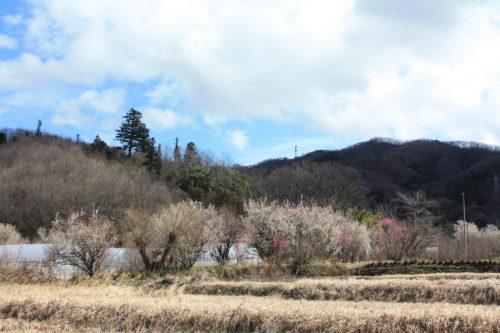 福島県福島市 花見山公園の情報 2020年3月3日 IMG_6872