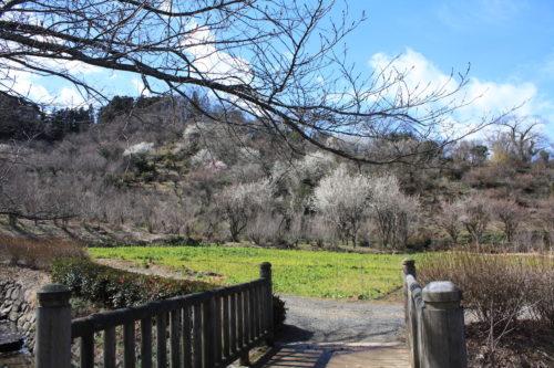 福島県福島市 花見山公園の情報 2020年3月3日 IMG_6874