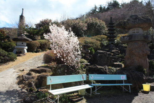 福島県福島市 花見山公園の情報 2020年3月3日 IMG_6878