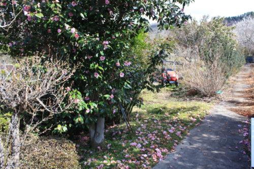 福島県福島市 花見山公園の情報 2020年3月3日 IMG_6879