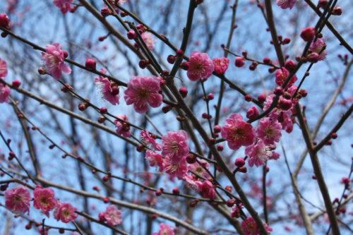 福島県福島市 花見山公園の情報 2020年3月3日 IMG_6882