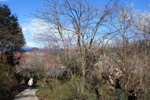 福島県福島市 花見山公園の情報 2020年3月3日 IMG_6883