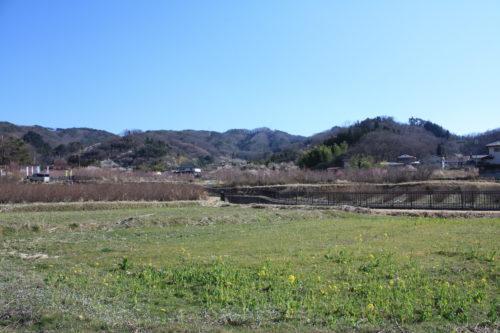 福島県福島市 花見山公園の情報 2020年3月19日 IMG_6910