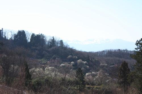 福島県福島市 花見山公園の情報 2020年3月19日 IMG_6916