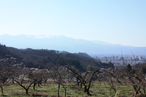 福島県福島市 花見山公園の情報 2020年3月19日 IMG_6917