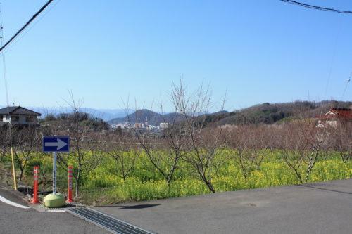 福島県福島市 花見山公園の情報 2020年3月19日 IMG_6919