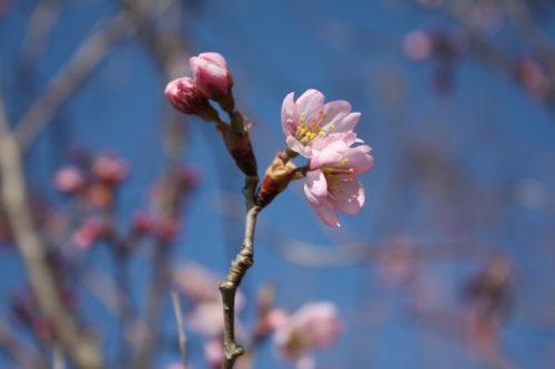 福島県福島市 花見山公園の情報 2020年3月19日 IMG_6921