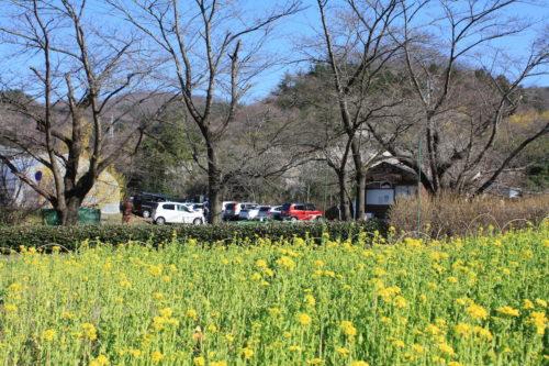 福島県福島市 花見山公園の情報 2020年3月19日 IMG_6923