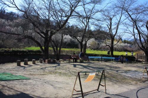 福島県福島市 花見山公園の情報 2020年3月19日 IMG_6925