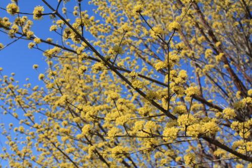 福島県福島市 花見山公園の情報 2020年3月19日 IMG_6927