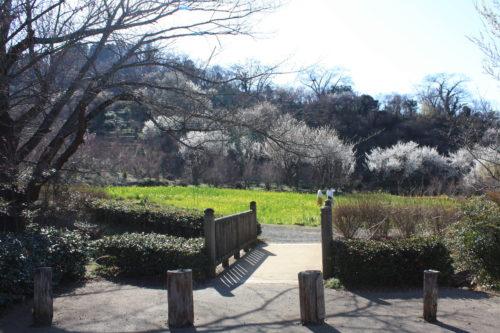 福島県福島市 花見山公園の情報 2020年3月19日 IMG_6928