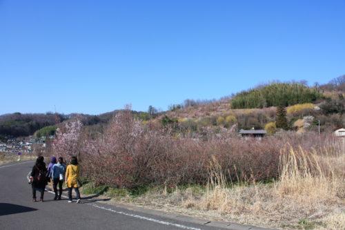 福島県福島市 花見山公園の情報 2020年3月19日 IMG_6929
