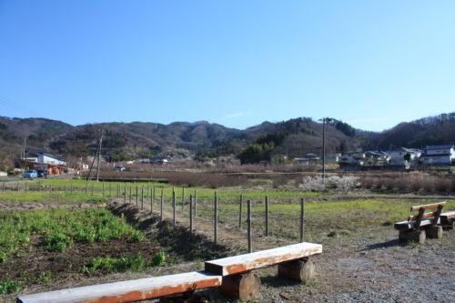 福島県福島市 花見山公園の情報 2020年3月19日 IMG_6932