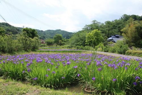 福島県福島市 花見山公園の情報 2020年5月25日 2_7152