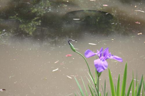 福島県福島市 花見山公園の情報 2020年5月25日 3_7152