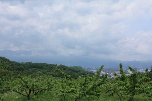 福島県福島市 花見山公園の情報 2020年5月25日 7_7151