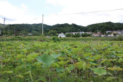 福島県福島市 花見山公園の情報 2020年7月2日IMG_1