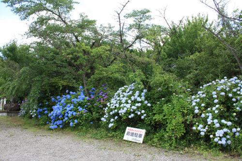 福島県福島市 花見山公園の情報 2020年7月2日IMG_2