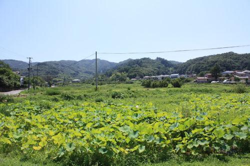 福島県福島市花見山公園2020年8月11日_7322