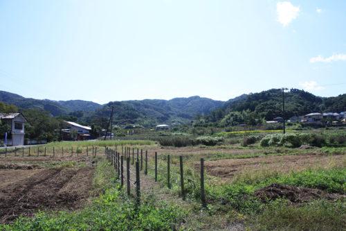福島県福島市花見山公園2020年10月2日画像7340
