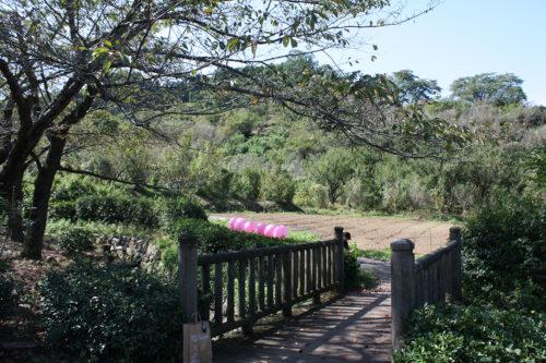 福島県福島市花見山公園2020年10月2日画像7348