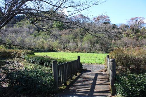 福島県福島市花見山公園2020年11月5日画像。今の菜の花畑