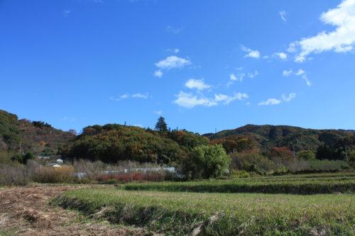 福島県福島市花見山公園2020年11月5日画像。花見山の紅葉