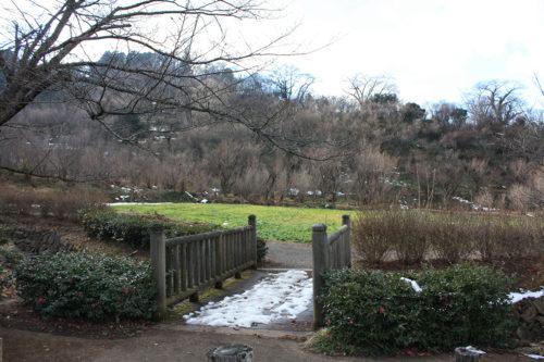 福島県福島市花見山公園2020年12月28日画像。雪残る花見山の菜の花畑1