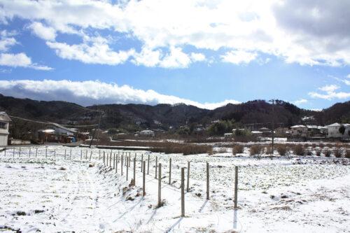 福島県福島市花見山公園2021年1月20日画像。水飲み場近くの菜の花畑
