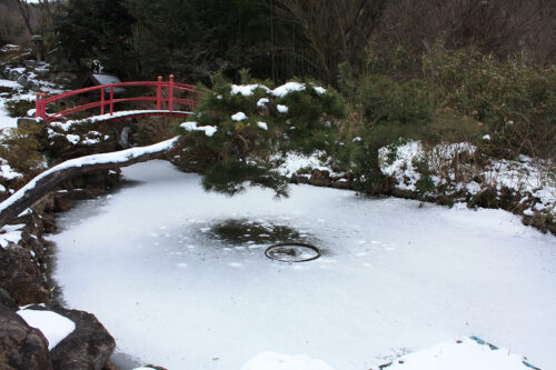 福島県福島市花見山公園2021年1月20日画像。凍った池