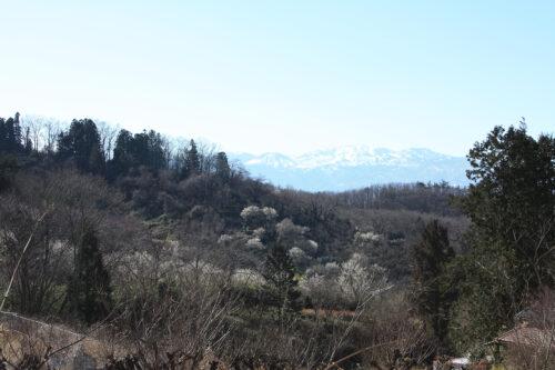 福島県福島市花見山公園2021年3月3日画像。花の谷コースのビュースポット