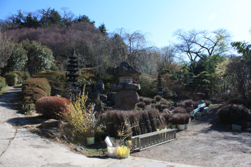 福島県福島市花見山公園2021年3月3日画像。阿部さんの花木