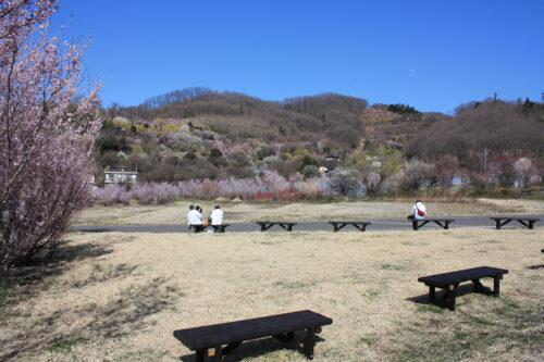 福島県福島市 花見山公園の情報 2021年3月24日花の谷を一望できる撮影スポット