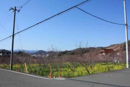 福島県福島市 花見山公園の情報 2021年3月24日ハナモモと菜の花