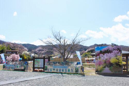福島県福島市 花見山公園の情報 2021年3月29日 記念撮影用パネル