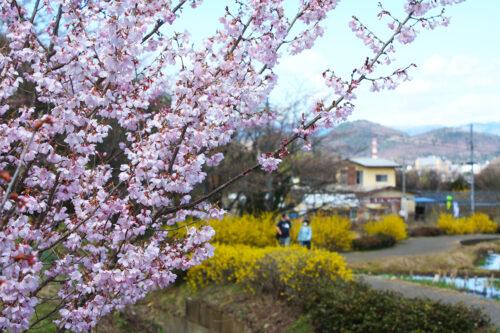 福島県福島市 花見山公園の情報 2021年3月29日 ウォーキングトレイル