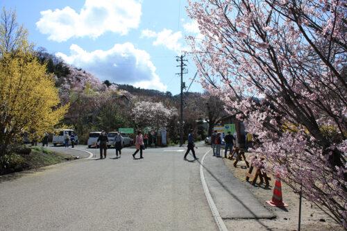 福島県福島市 花見山公園の情報 2021年3月29日 公園入口付近